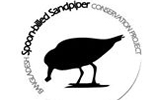 Bangladesh Spoon-billed Sandpiper Conservation Project